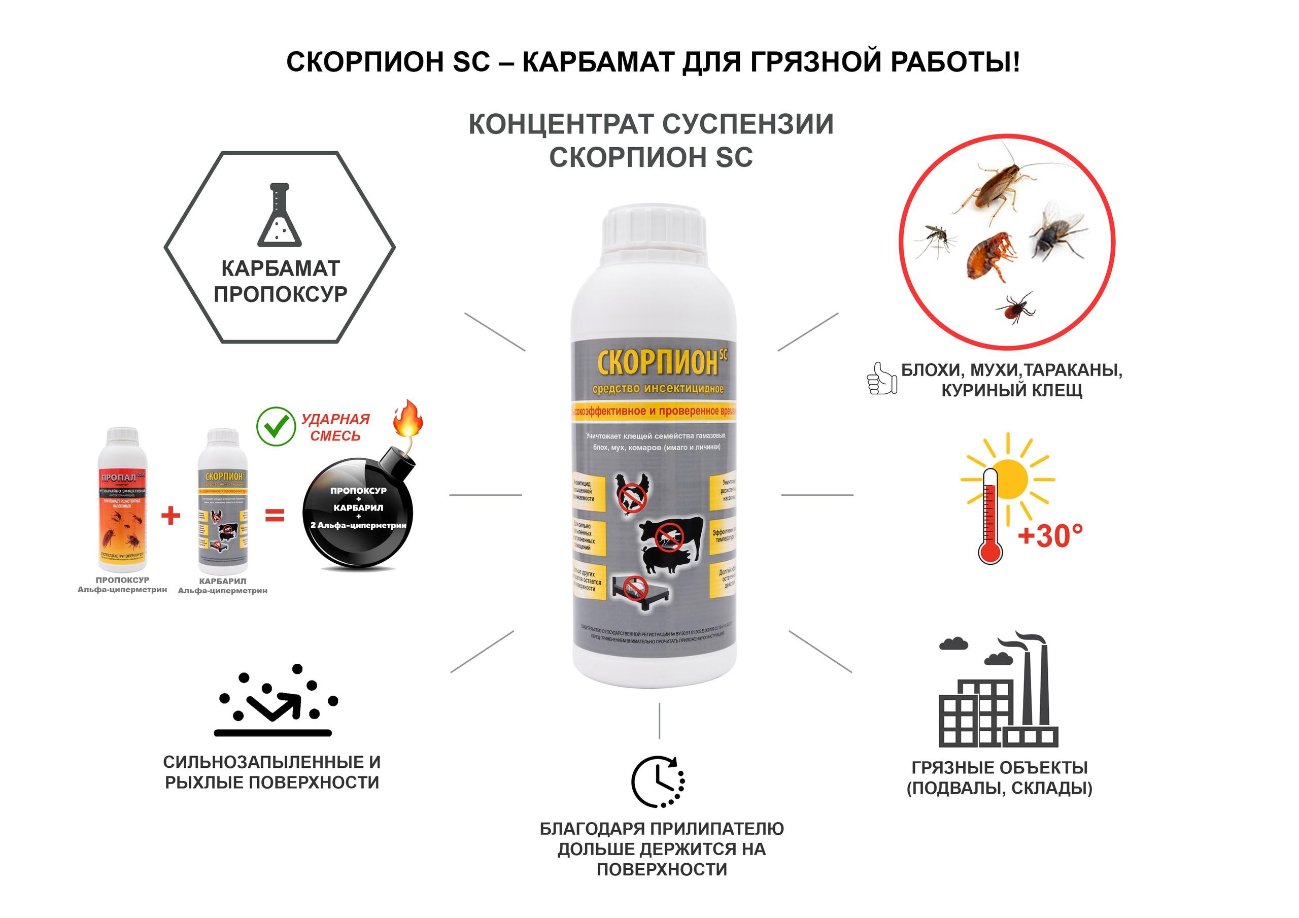 scorpion-sc